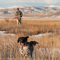 upland game bird hunting, freezeout lake montana