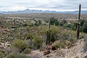 Desert landscape around Boyce Thompson Arboreum, southern Arizona, USA