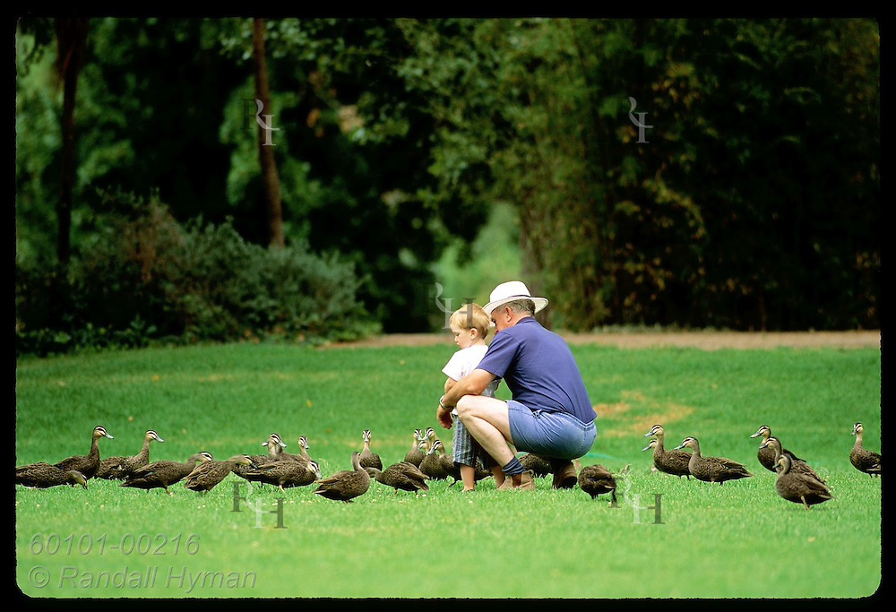 Man kneels beside grandson feeding ducks in public park in town of Wagga Wagga, New South Wales. Australia