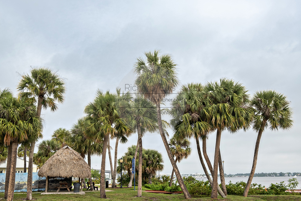 Palm trees along the Stuart Boardwalk at Flagler Park in the historic downtown in Stuart, Florida. The tiny hamlet was founded in 1870 and was voted the Happiest Seaside Town in America by Coastal Living.