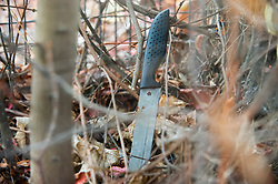 © Licensed to London News Pictures. 06/11/2018. Tulse Hill, UK. A knife covered with blood lies in a bush near the scene in Tulse Hill, South London, where a murder investigation has been launched. A 16 year old boy was found with fatal injuries last night. Photo credit: Grant Falvey/LNP