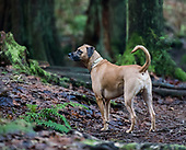 Charlie the dog (Dec 31 2017)