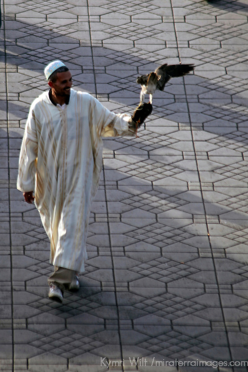 Africa, Morocco, Marrakech. Man with Falcon at Jamaa el Fna.