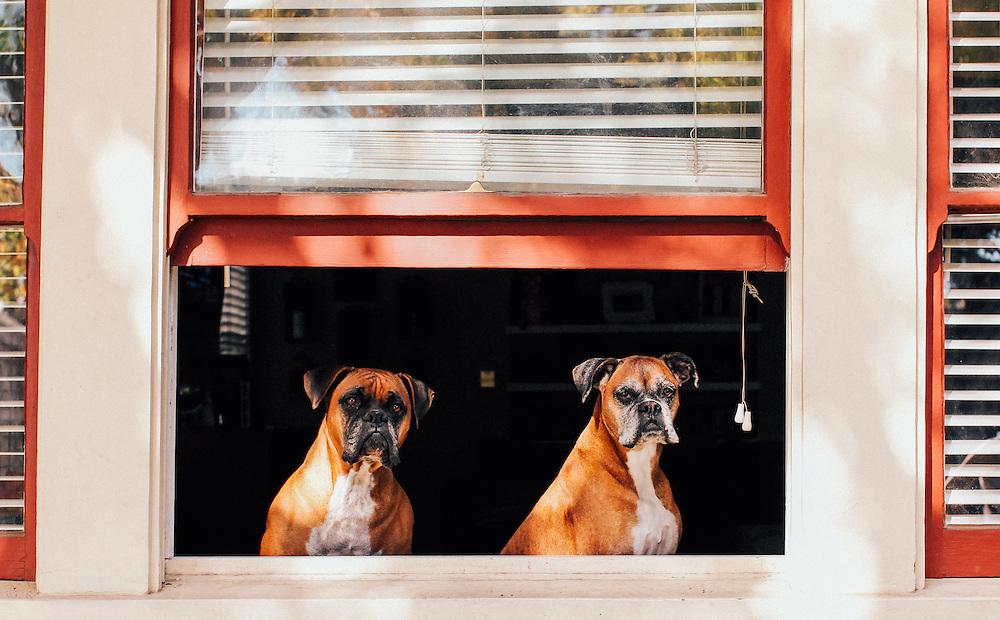 Orange County pet portraits.