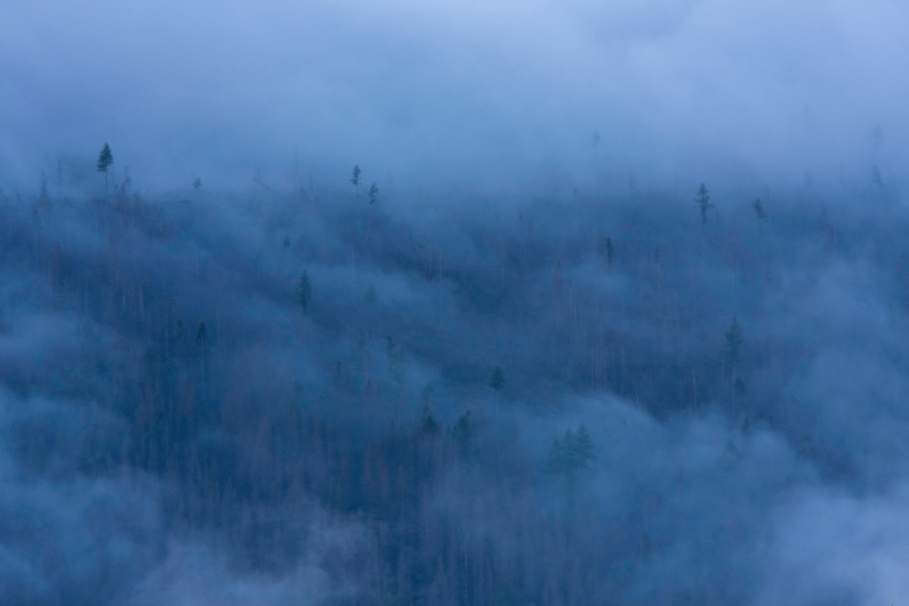 Clouds above mountain forest affected by Bark beetle (Scolytidae). Western Tatras, Slovakia. June 2009. Mission: Ticha