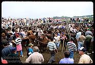 19: GALICIA WILD HORSE CULLING