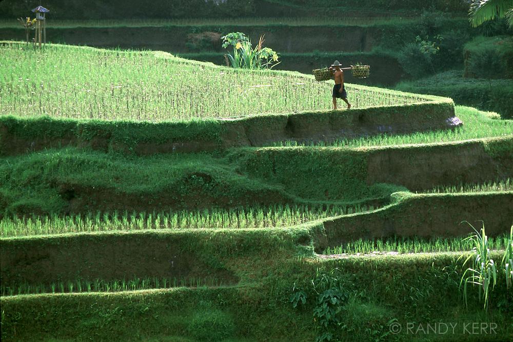 Rice field worker, Bali