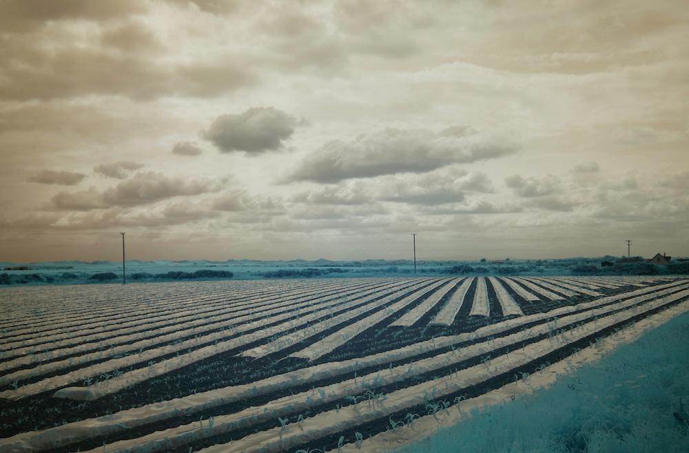 Field near Wexford Ireland