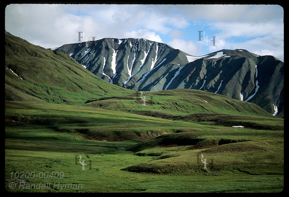 Hills carpeted in bright green tundra contrast w/ gray, eroded volcanic ridge behind; Denali National Park, Alaska