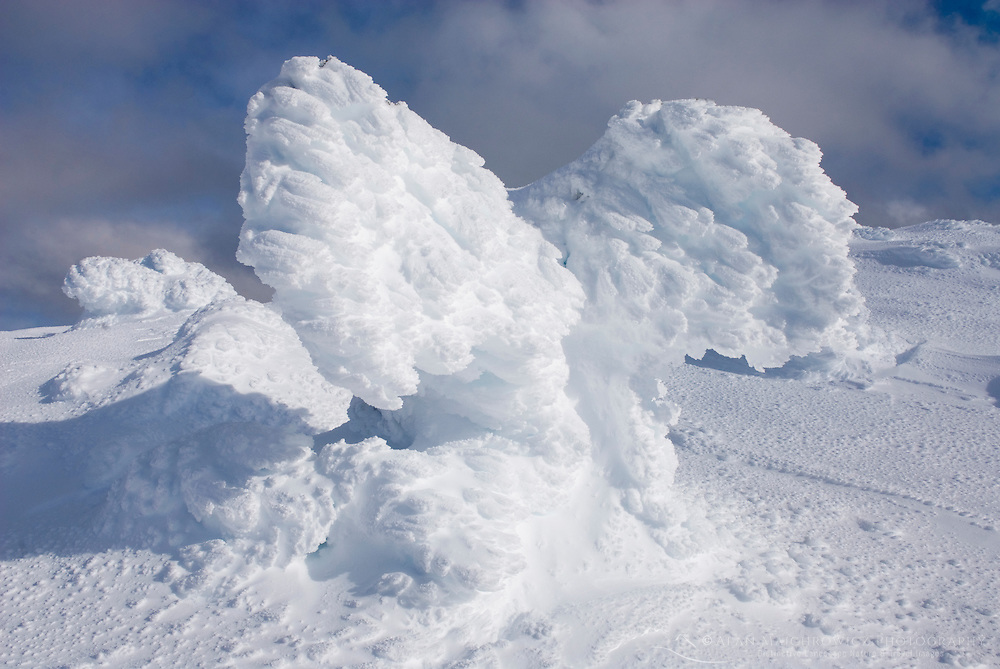 Ice encased trees or Krummholz in the shape of wings on the summit of Three Brothers Mountain, Manning Provincial Park British Columbia Canada