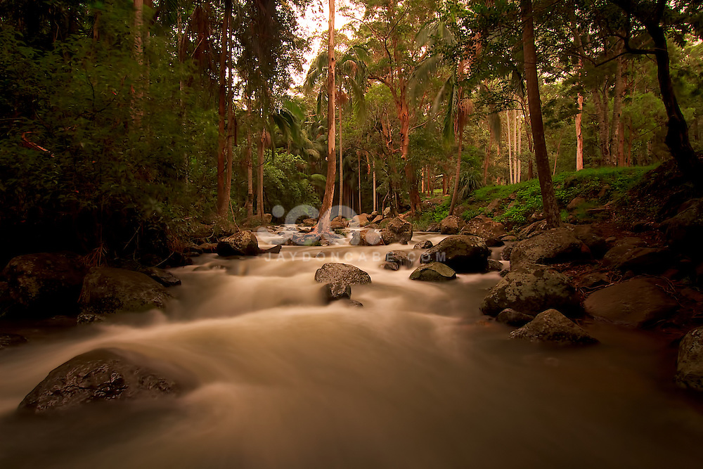Landscape and Nature Photography by Jaydon Cabe, Mt Tamborine Queenlsland
