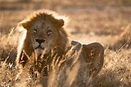 Kenya Safari 2018