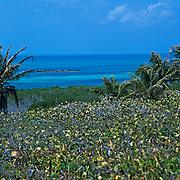 Contoy Island..Quintana Roo, Mexico