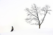 A snowboarder descends on a run at Grand Hirafu resort in the Niseko ski region of Hokkaido, Japan on Feb. 9 2010. Niseko is made up of 57 runs  totaling over 47 km in groomed slopes and is the only resort area in Japan where off-piste skiing and boarding is legal.