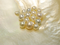 Beautiful loose pearls from Catalina Pearls, Dampier Terrace, Broome, lying on a South Sea pearl shell.
