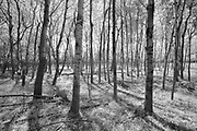 Trees in the Seine River Forest<br />Winnipeg<br />Manitoba<br />Canada<br />Winnipeg<br />Manitoba<br />Canada