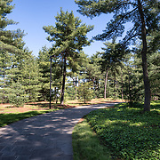 Path through the white pines at the Lyndon Baines Johnson Memorial Grove. The memorial is set in Lady Bird Johnson Park on the banks of the Potomac on the George Washington Memorial Parkway in Arlington, Virginia.