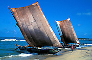 Sri Lanka..Catamaran fishing boats on the West Coast beach at Negombo. Negombo, 20 miles north of Colombo, is a big fishing and tourist town.