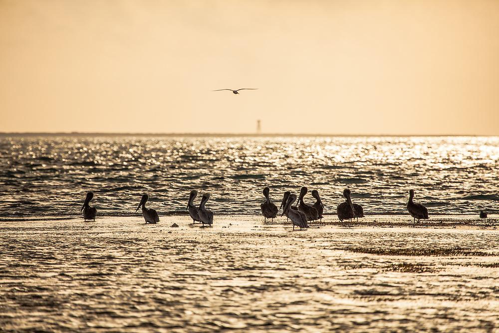 Wildlife @ Alacranes Island