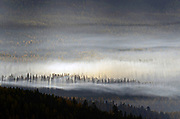 Fog and smoke drift over western larch in the Yaak Valley as a windstorm moves in at sunrise in fall. Kootenai National Forest in the Purcell Mountains, northwest Montana.