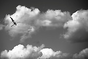 ALDRIDGE Blake GBR<br /> High Diving - Men's 27m high dive preliminaries<br /> Day 11 03/08/2015<br /> XVI FINA World Championships Aquatics Swimming<br /> Kazan Tatarstan RUS July 24 - Aug. 9 2015 <br /> Photo Giorgio Perottino