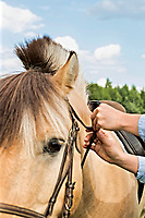 Close up photo of mature woman adjusting horse bit in ranch