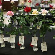 Rose Show, Winter Park, Florida