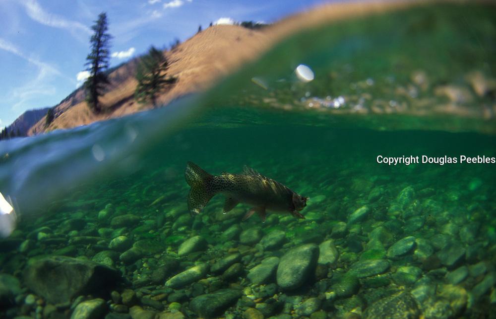 Flyfishing, Salmon River, Idaho<br />