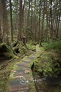 Forest path through the lush rainforest on SGang Gwaii, Haida Gwaii, Queen Charlotte Islands, Gwaii Haanas National Park, British Columbia, Canada