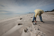 12/19/2015,  Long Beach, Mississippi, A biologist with the Mississippi Department of Environmental Quality whosurveying dead ducks during a fish kill event.  A red tide ( toxic algae growth)  was blaimed for a fish kill event that also killed many ducks and some mammals along beaches in Mississippi along the Gulf of Mexico that started at the deginning of December and continued through the end of the month. Warming tempatures caused by climate change,  make 'red tide' conditions a growing problem on the Gulf Coast.