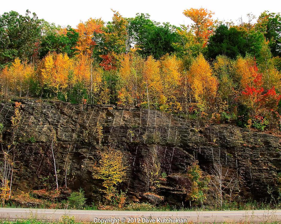 Trees survuive and grow despite man, e. dorset, vt