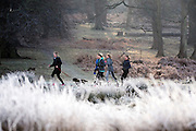© Licensed to London News Pictures. 20/01/2015. Richmond, UK. Women jog through the park. Deer graze in frost covered grasses in Richmond Park, Surrey today 20th January 2015. Britain is experiencing very cold temperatures. Photo credit : Stephen Simpson/LNP