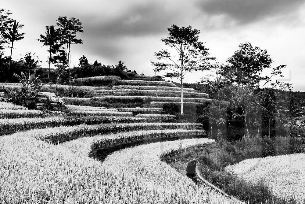 Rice paddy fields of Sidemen, Bali, Indonesia, Southeast Asia