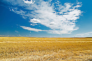 wheat field and clouds<br /> near Bengough<br /> Saskatchewan<br /> Canada