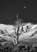 Setting moon, Eastern Sierra