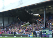 Kayla the Crystal Palace eagle - Crystal Palace v Dundee - Julian Speroni testimonial match at Selhurst Park<br /> <br />  - © David Young - www.davidyoungphoto.co.uk - email: davidyoungphoto@gmail.com