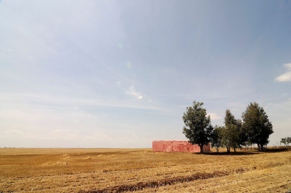 A corn or wheat field with a few trees. Boulaouane. Africa. Morocco.
