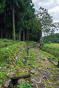 Photo shows a recently excavated road in the grounds of Heisenji Shrine in Katsuyama, Fukui Prefecture, Japan on Oct. 5, 2016.  Municipal excavations are beginning to unveil a large network of raids and living quarters inside this once thriving pilgrimage and learning centre. ROB GILHOOLY