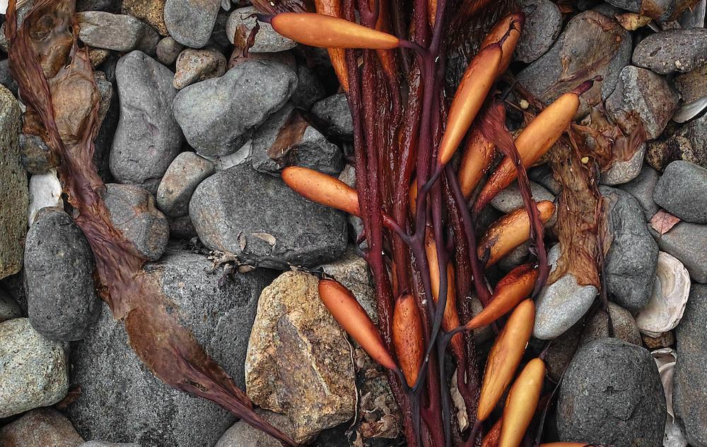 Detail from 'Kelp'