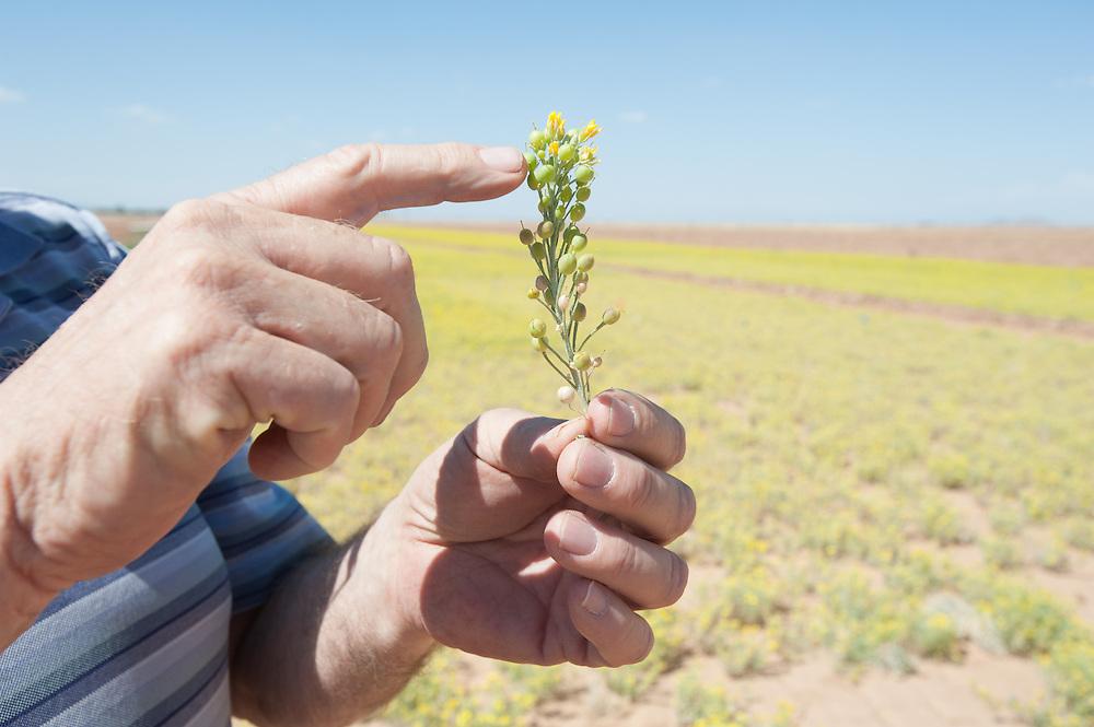 Farmer Holding His Crop