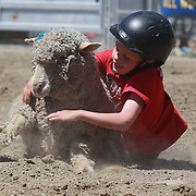 Charlie Breen in action during his victory in the kids sheep ride competition at the Wanaka Rodeo. Wanaka, South Island, New Zealand. 2nd January 2012