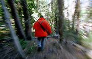 A hunter walks through the forest on a hunt in the Colorado Rocky Mountain wilderness