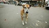 Pahar Ganj - Delhi - India
