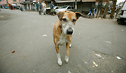 curious dog in paharganj, delhi, india