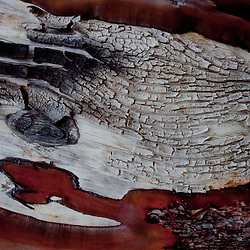 Madrona (Arbutus menziesii) Bark, Yellow Island, San Juan Islands, Washington, US