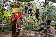 An elephant waits to be ridden by tourists at the Olive Dam Dai cultural village in Xishuangbanna, China. The Dai are an ethnic minority living in western China as well as northern Laos, Thailand, and Vietnam.