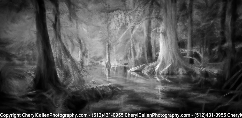 Cypress Trees reflecting in the Frio River