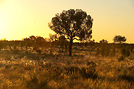 Christmas morning in the Australian outback