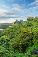 United Kingdon; Scotland; Isle of Skye; Quiraing; escarpment; landscape; green; hills; scenic; tree