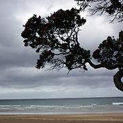 Surfers at  Sandy Bay, Northland, New Zealand,  23rd November 2010 Photo Tim Clayton.